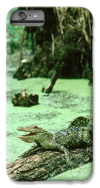 American Alligator IPhone 6 Plus Case by Gregory G. Dimijian, M.D.