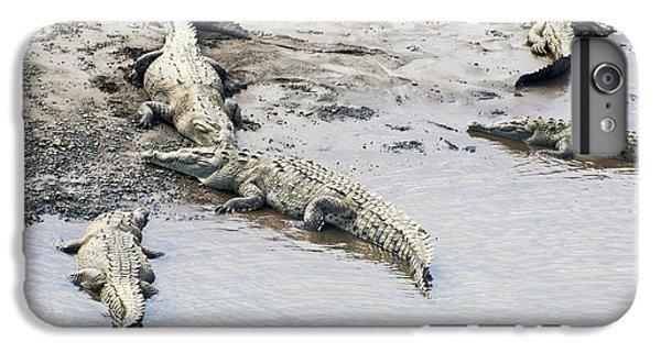 American Crocodiles (crocodylus Acutus) IPhone 6 Plus Case by Photostock-israel
