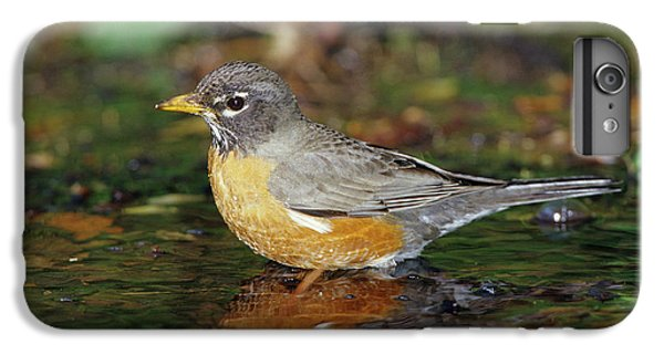 American Robin (turdis Migratorius IPhone 6 Plus Case by Richard and Susan Day