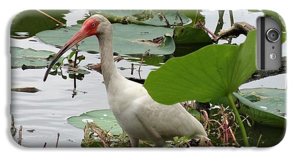 American White Ibis In Brazos Bend IPhone 6 Plus Case by Dan Sproul