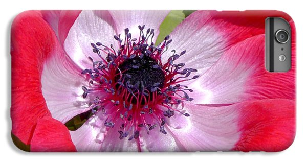 Anemone De Caen IPhone 6 Plus Case by Rona Black