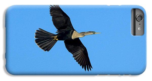 Anhinga Female Flying IPhone 6 Plus Case by Anthony Mercieca