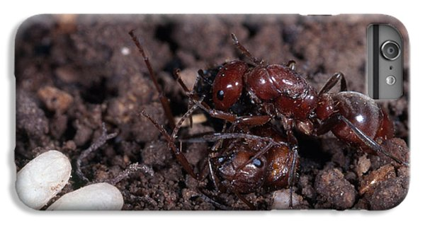 Ant Queen Fight IPhone 6 Plus Case by Gregory G. Dimijian, M.D.