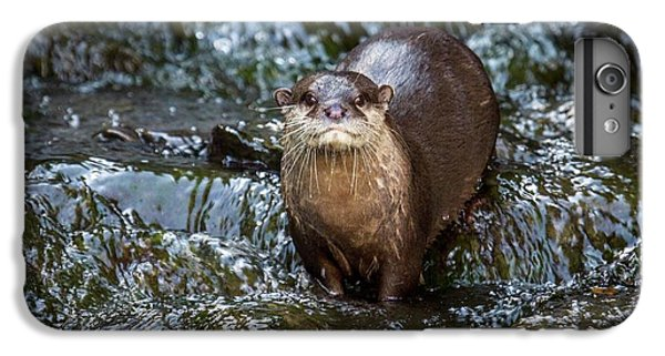 Asian Small-clawed Otter IPhone 6 Plus Case by Paul Williams