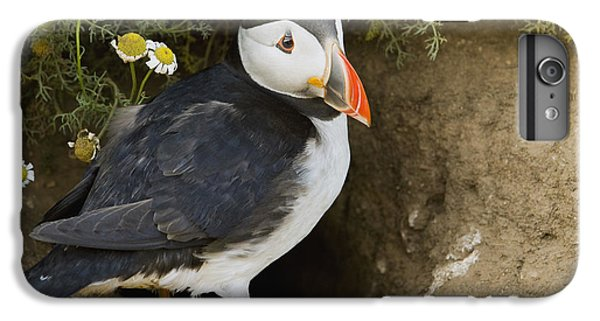 Atlantic Puffin At Burrow Skomer Island IPhone 6 Plus Case by Sebastian Kennerknecht