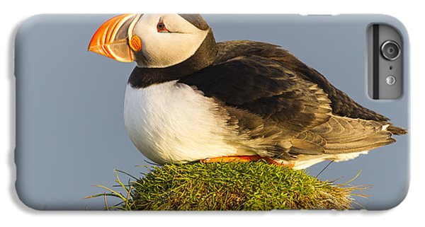 Atlantic Puffin Iceland IPhone 6 Plus Case by Peer von Wahl