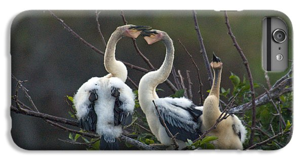 Baby Anhinga IPhone 6 Plus Case by Mark Newman