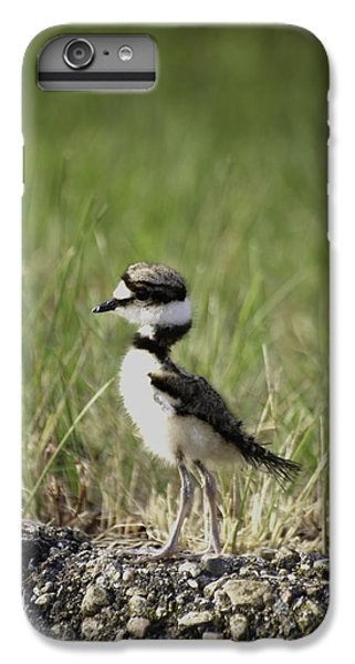 Baby Killdeer 2 IPhone 6 Plus Case by Thomas Young