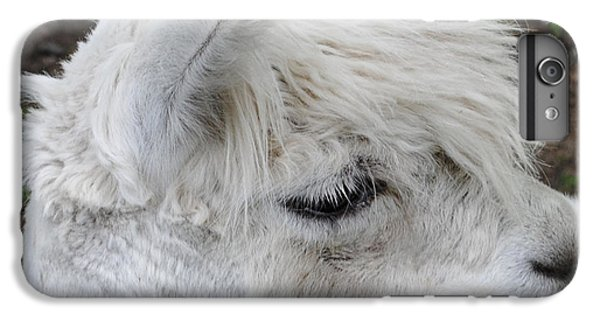 Baby Llama IPhone 6 Plus Case by Ellen Henneke