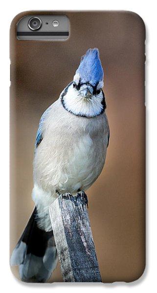 Backyard Birds Blue Jay IPhone 6 Plus Case by Bill Wakeley