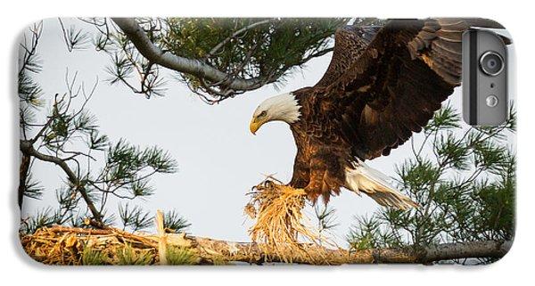 Bald Eagle Building Nest IPhone 6 Plus Case by Everet Regal