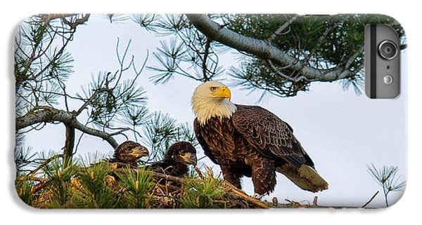 Bald Eagle With Eaglets  IPhone 6 Plus Case by Everet Regal