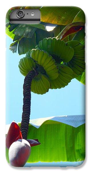 Banana Stalk IPhone 6 Plus Case by Carey Chen