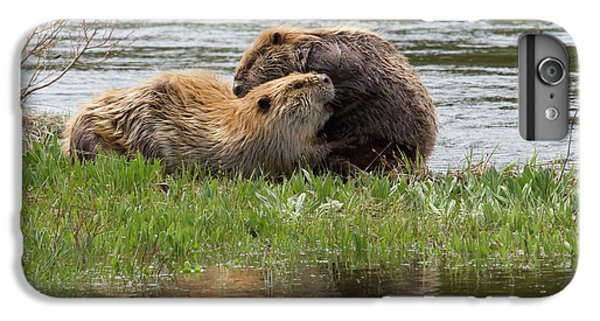 Beaver Pair Grooming One Another IPhone 6 Plus Case by Ken Archer