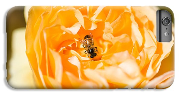 Bee Pollinating A Yellow Rose, Beverly IPhone 6 Plus Case by Panoramic Images