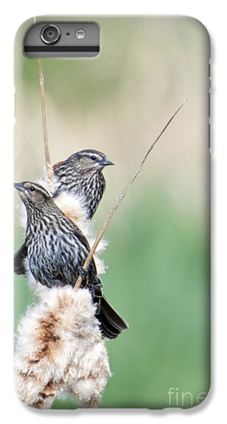 Blackbird Pair IPhone 6 Plus Case by Mike  Dawson