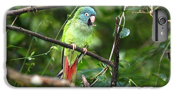 Blue Crowned Parakeet IPhone 6 Plus Case by James Brunker