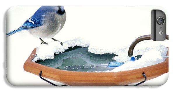 Blue Jay At Heated Birdbath IPhone 6 Plus Case by Steve and Dave Maslowski