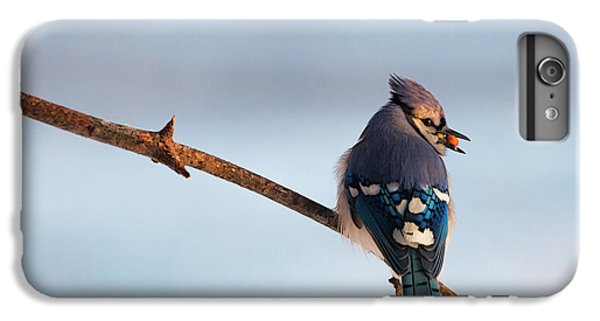 Blue Jay With Nuts IPhone 6 Plus Case by Everet Regal