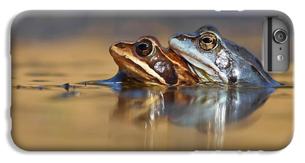 Blue Love ... Mating Moor Frogs  IPhone 6 Plus Case by Roeselien Raimond