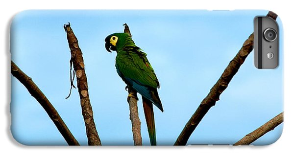 Blue-winged Macaw, Brazil IPhone 6 Plus Case by Gregory G. Dimijian, M.D.