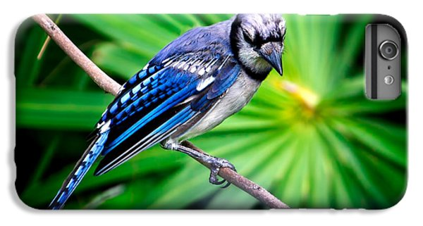 Thoughtful Bluejay IPhone 6 Plus Case by Mark Andrew Thomas