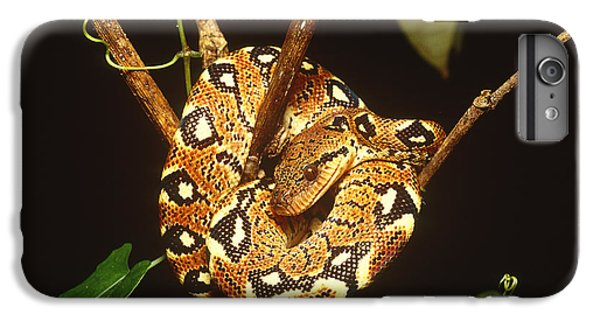 Boa Constrictor IPhone 6 Plus Case by Art Wolfe