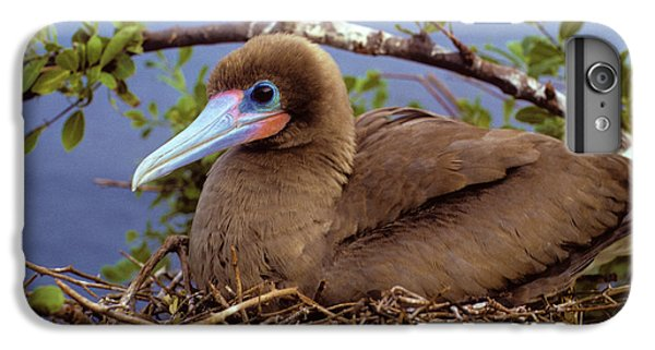 Brown Color Morph Of Red-footed Booby IPhone 6 Plus Case by Thomas Wiewandt