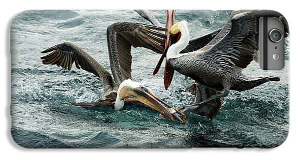 Brown Pelicans Stealing Food IPhone 6 Plus Case by Christopher Swann