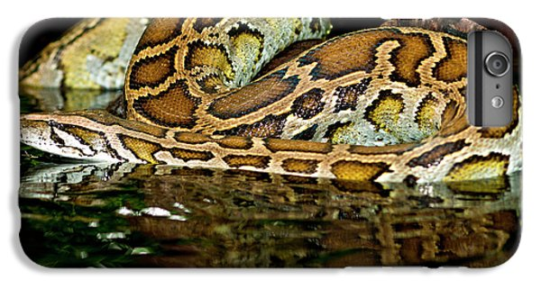 Burmese Python, Python Molurus IPhone 6 Plus Case by David Northcott