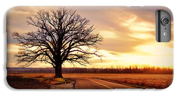 Burr Oak Silhouette IPhone 6 Plus Case by Cricket Hackmann