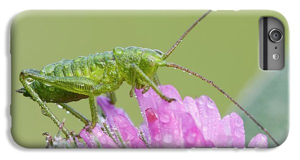 Bush Cricket IPhone 6 Plus Case by Heath Mcdonald