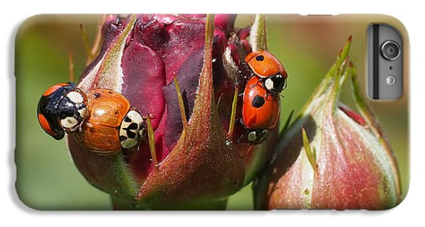 Busy Ladybugs IPhone 6 Plus Case by Rona Black