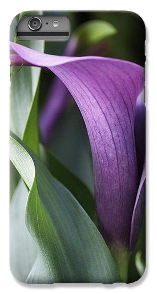 Calla Lily In Purple Ombre IPhone 6 Plus Case by Rona Black