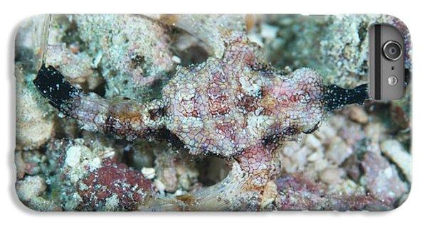 Camouflaged Pegasus Sea Moth IPhone 6 Plus Case by Scubazoo