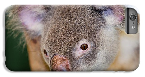 Captive Koala Bear IPhone 6 Plus Case by Ashley Cooper