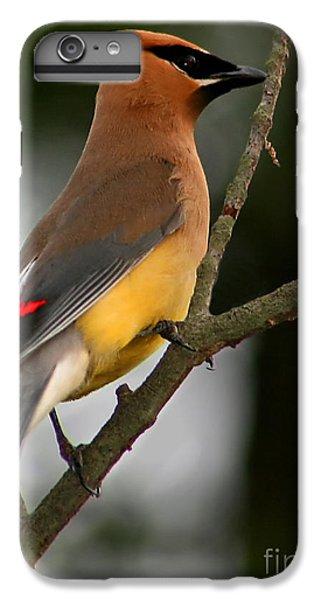 Cedar Wax Wing II IPhone 6 Plus Case by Roger Becker