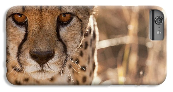 Cheetah Conservation Fund, Namibia IPhone 6 Plus Case by Janet Muir