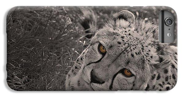 Cheetah Eyes IPhone 6 Plus Case by Martin Newman