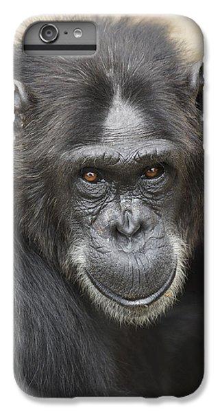 Chimpanzee Portrait Ol Pejeta IPhone 6 Plus Case by Hiroya Minakuchi