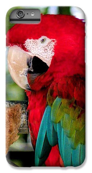 Chowtime IPhone 6 Plus Case by Karen Wiles
