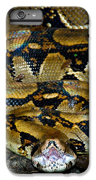 Close-up Of A Boa Constrictor, Arenal IPhone 6 Plus Case by Panoramic Images