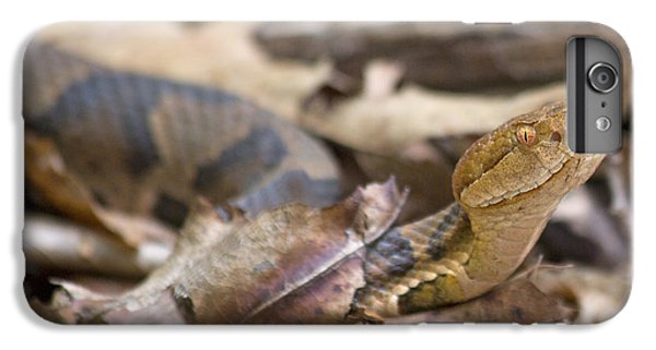 Copperhead In The Wild IPhone 6 Plus Case by Betsy Knapp