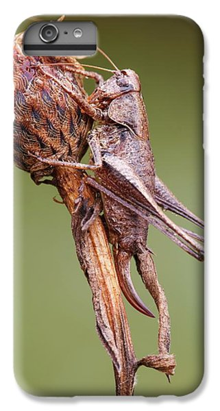 Dark Bush Cricket IPhone 6 Plus Case by Heath Mcdonald
