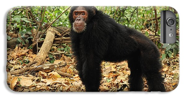 Eastern Chimpanzee Gombe Stream Np IPhone 6 Plus Case by Thomas Marent