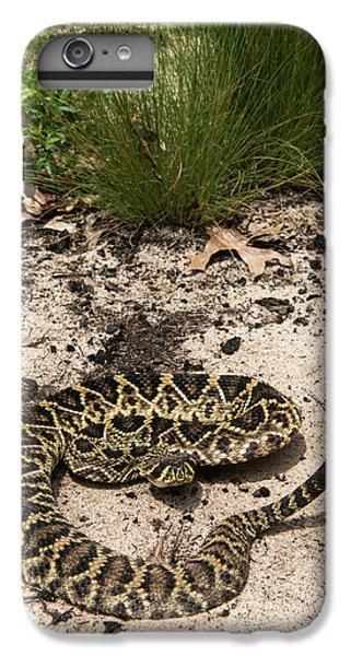 Eastern Diamondback Rattlesnake IPhone 6 Plus Case by Pete Oxford