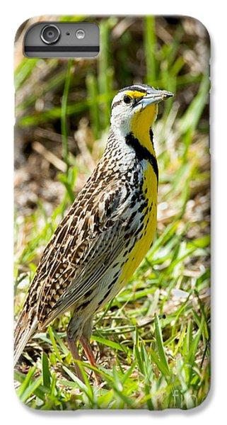 Eastern Meadowlark IPhone 6 Plus Case by Anthony Mercieca