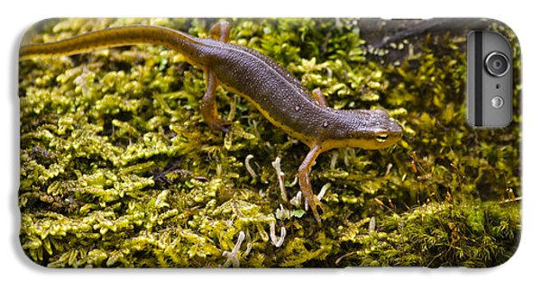 Eastern Newt Aquatic Adult IPhone 6 Plus Case by Christina Rollo