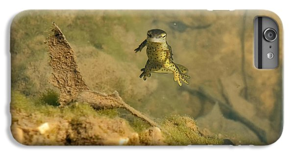 Eastern Newt In A Shallow Pool Of Water IPhone 6 Plus Case by Chris Flees