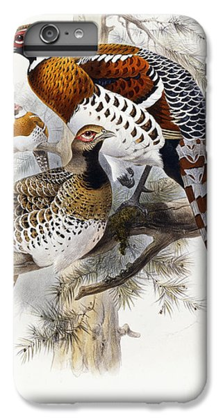 Elliot's Pheasant IPhone 6 Plus Case by Joseph Wolf